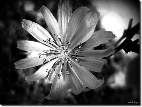 A date with a flower... by ansdesign