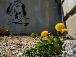 Pretty Weeds and Graffiti by KBeezie