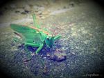 Grasshopper in motion 2 by Ingnition