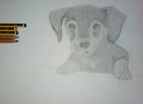 Puppy by wolfland2
