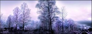 Birch Trees Pano Infrared... by MichiLauke