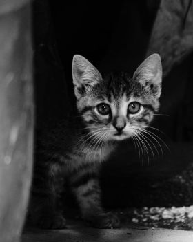 Cats From Streets by MuratGezer