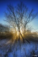Beautiful Winter Morning in Ontario 3 by Nini1965