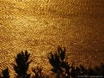 Golden water by Starsong-Studio