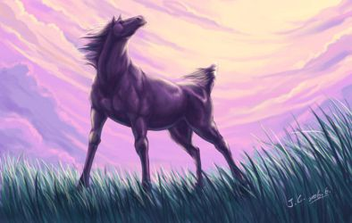 Horse by J-C