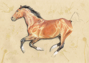 colored pencils study by Pencil--Pony