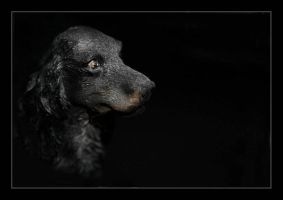 Little dog by JVre