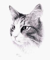 A Drawing of a cat by Atarial