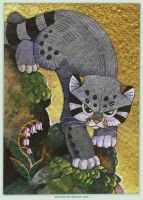 August ACEO: Pallas cat by spocha