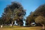 Trees in a Park In Santa Monica California by LauraAnnTull