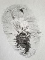 Swan by moryonenn