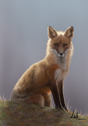 Fox study by BlackLenk