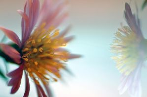 Dream of flowers by tomsumartin