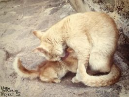 Project 52 : week 05 | Mother's Love by CrazyNalin