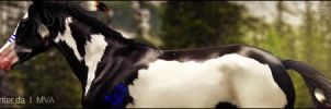 Keoni banner by VIP-EquineArt