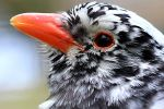 Close-up of a Beautiful Bird 02 by s-kmp