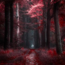 Bloody Woods by Oer-Wout