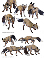 Smoky the vixen sketches by Astarcis