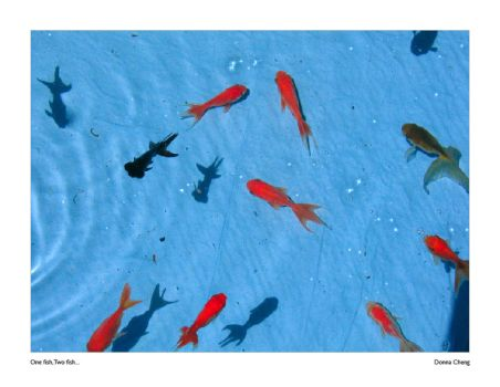 One Fish, Two Fish... by eyecandiez