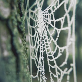 web by 14th-division