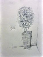 little tree in a basket at the doctor's office by refinedgluttony