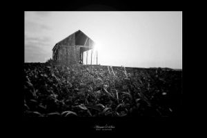 my silent exile by artemissere