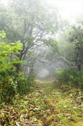 Misty path into Lake Mashu by Furuhashi335