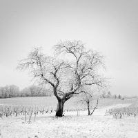The snow is rare in my area... by laurentdudot