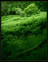 Green by Navanna