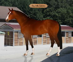 RvS Hello Sanctos UH by RvS-RiverineStables