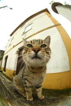 Fisheye effect stock 9 by Stock-gallery