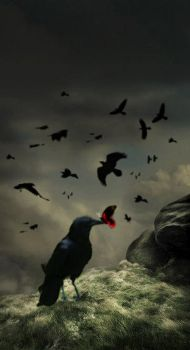 The raven and the butterfly by rein-raus