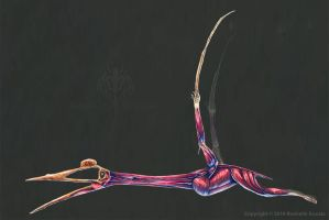 Quetzalcoatalus Northropi Muscle Study (No Labels) by TheDragonofDoom