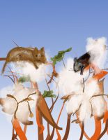 Cotton Harvest Mice Ex  2 by Yosemite-Stories