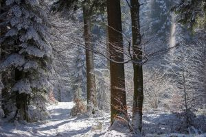 Winter Forest by kuschelirmel
