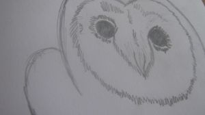 Owl Drawing by Nalarules