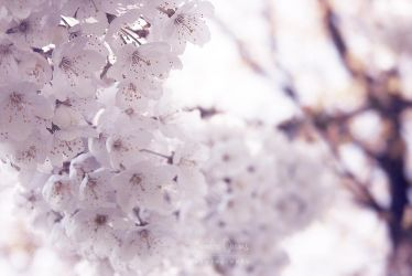 Blossoms 02 by JArdley