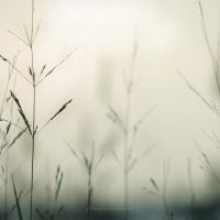 Tranquility by PiaG