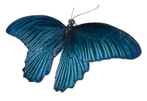 Blue Butterfly 27 png by xybutterfly