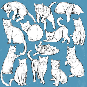 Cat anatomy study by sayuttan