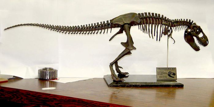 Tyrannosaurus Rex / T-rex Skeleton Sculpture body by Weapon-X-1973