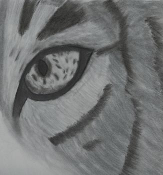 Eye of the Tiger by evilmonk1993