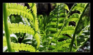 Fern 02 by typhlosion