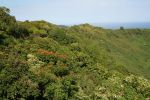Stop Along the Hana Highway 2 by hyannah77-stock