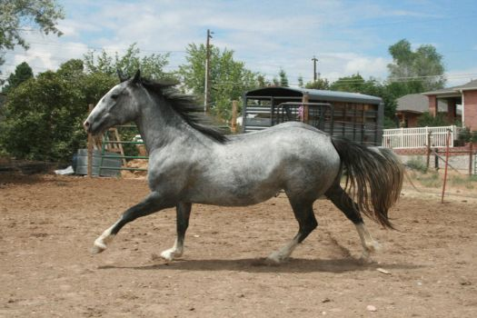 Blue Roan Stock 83 by tragedyseen