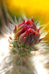 Cactus Bud Detail by Monkeystyle3000