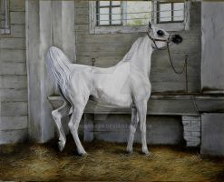ARABIAN MARE by robybaer