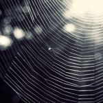 Web by leenik