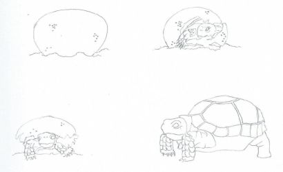 Tortoise Pack Sketch by Chuymage