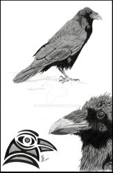 Ravens by dracon257